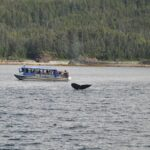 The Main Benefits of Going on a Whale Watching Trip
